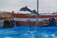 ДельфинарийАрхипка